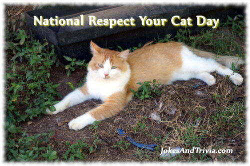 Respect Your Cat!