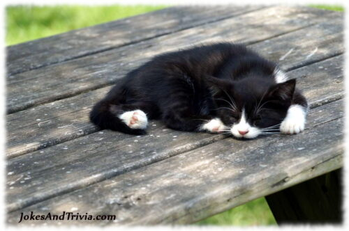 cat sleeping on picnic table