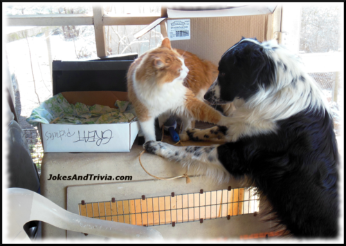 cat and English Shepherd dog