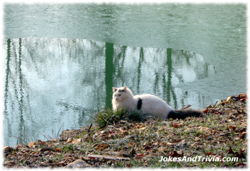 cat beside frozen pond