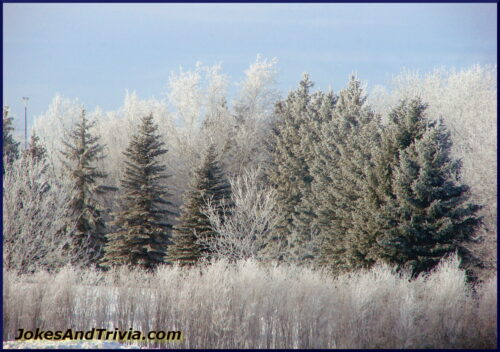 frost on trees and snow